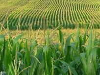 House Members Seek to End Ethanol Mandate